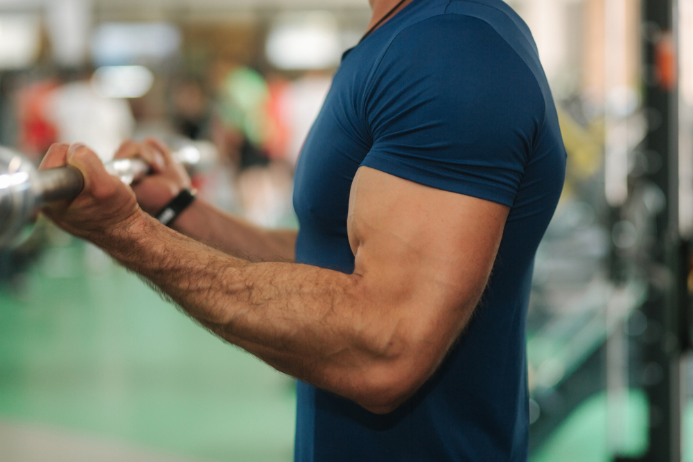 biceps-musculation